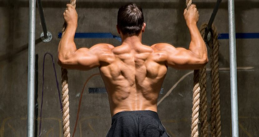 BEST SUPPLEMENT FOR BULKING UP THE BODY MUSCLES